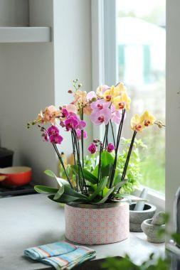 1 flor só 5