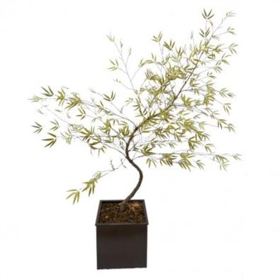 bambu-mosso-verde-oliva_lrg-_1_