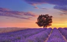 17-Лавандовые поля Прованса на фоне заката