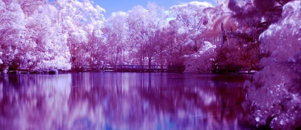 purple-landscape-wallpaper-2