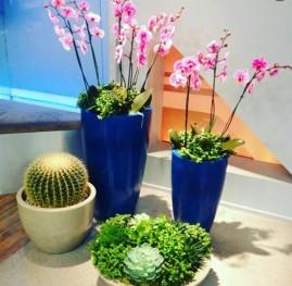vcc-flores-6