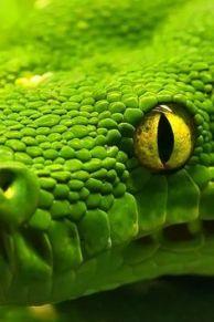 vcc-greenery_pantone-2017-cor-13