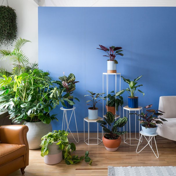 paisagismo-selvva-plantas-dentro-de-casa-05