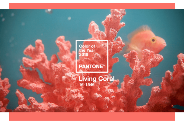 living-coral (1)